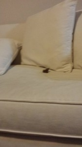 poop on couch